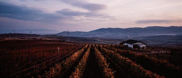 Barbare Wineyards, Tekirdag