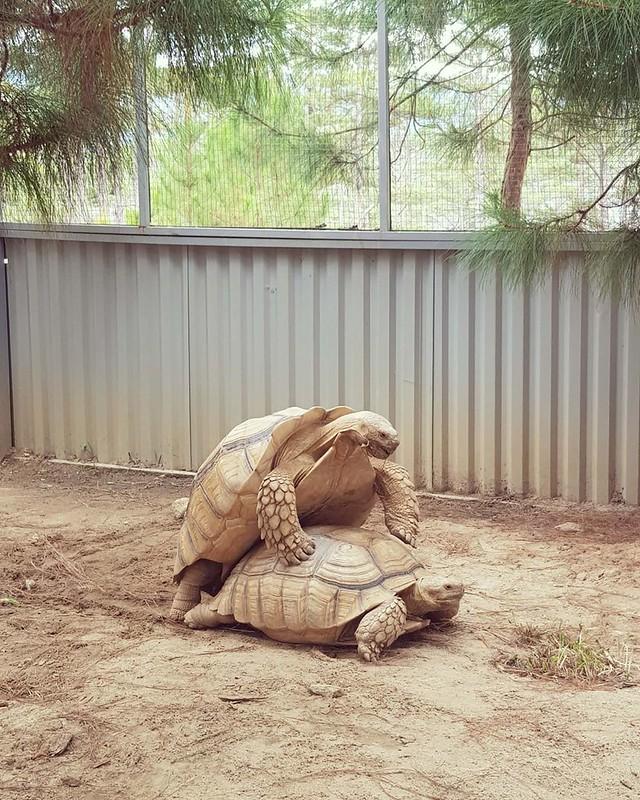Phượt Hot - Khám phá vườn thú Zoodoo Đà Lạt cực kỳ đáng yêu (39)