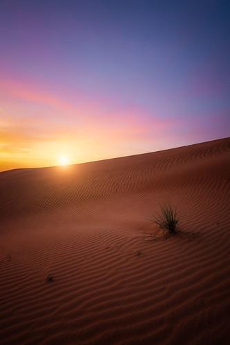 desert sand dunes sunset dubai