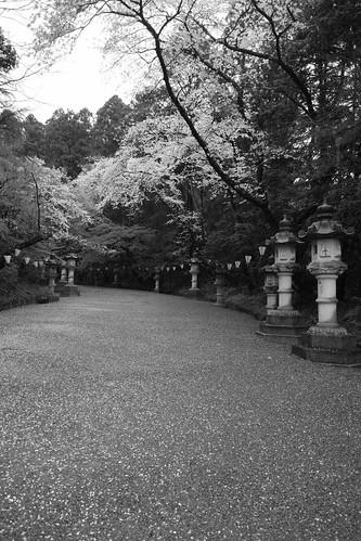 29-03-2020 Katori-Jingu Shrine (3)