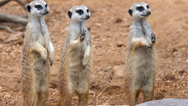 Phượt Hot - Khám phá vườn thú Zoodoo Đà Lạt cực kỳ đáng yêu (32)