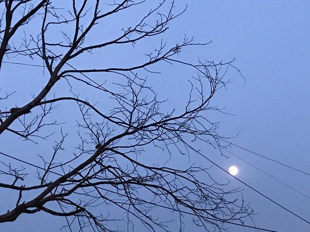 City Obituary - A Leafless Tree, Lodhi Road