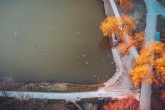 Park | Kaunas aerial