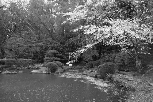 29-03-2020 Katori-Jingu Shrine (18)