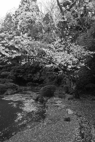 29-03-2020 Katori-Jingu Shrine (17)