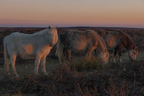 sunrisechurchstrettonlongmynd sunrise mist misty hills layers sky golden blue heather cloud view landscape isolation lonely ponies
