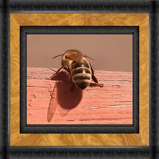 Back Of Honeybee Framed