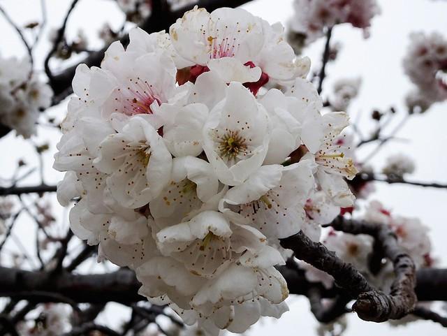 Jolie boule de fleurs......