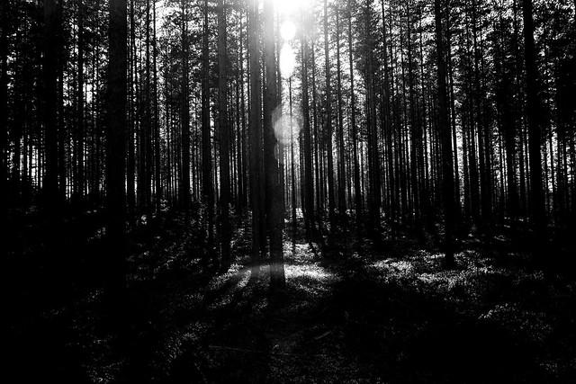 Backlit forest silhuette