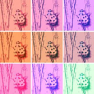 Asian Lady Beetle Pop Art