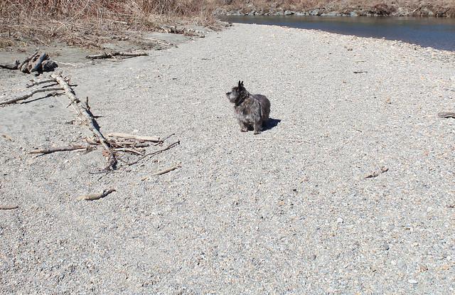Sedum on what constitutes a beach in Vermont - 3/27/20