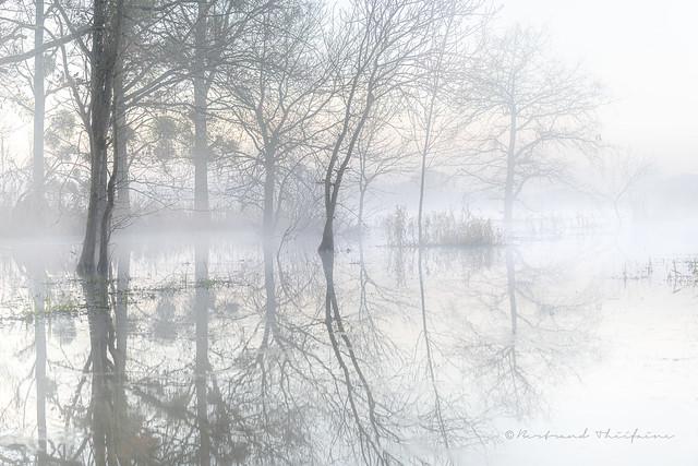 Dans la brume éphémère