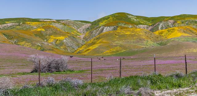 Carrizo Plain 2010 45