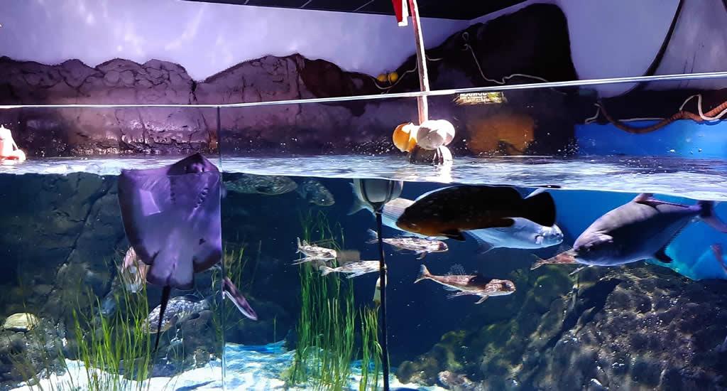 Sevilla met kinderen: Aquarium | Mooistestedentrips.nl