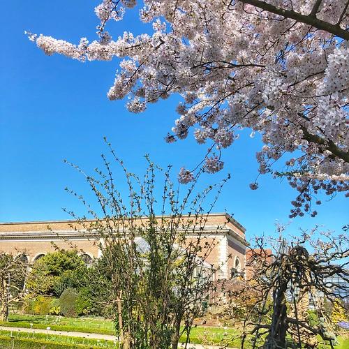 Prille lente in de Leuvense Kruidtuin