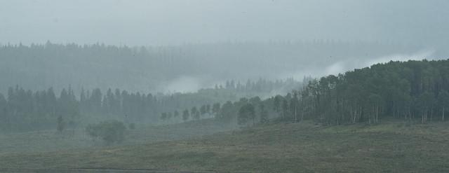 Colorado Pines