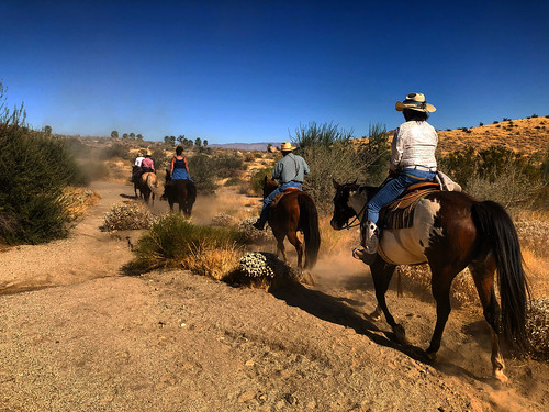 california horses horse hot cowboy desert sunny socal cowgirl southerncalifornia horseback horseriding horseriders dusty cowboys trail cowgirls sky bluesky