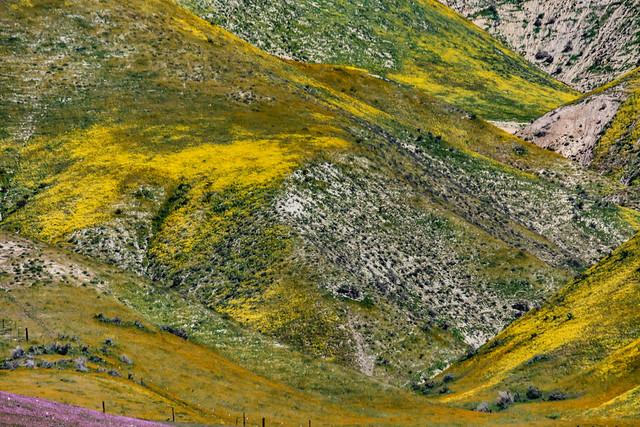 Carrizo Plain 2010 48