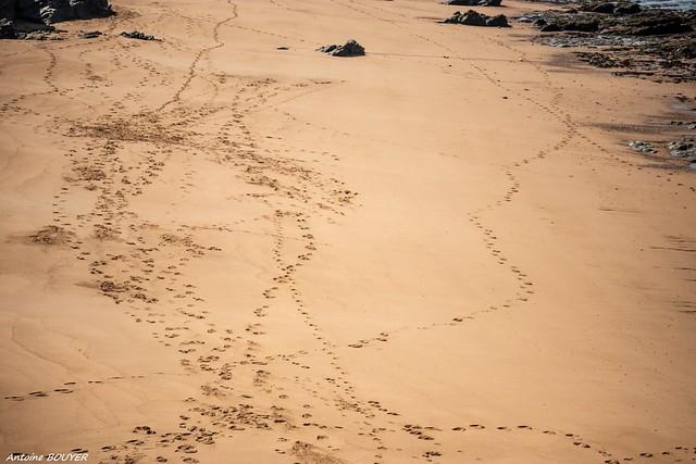 Traces de passages sur le sable