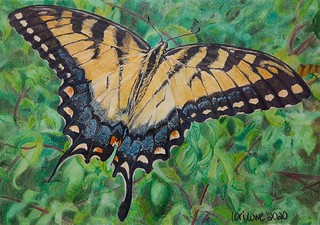 Tiger Swallowtail Butterfly - CPM Challenge