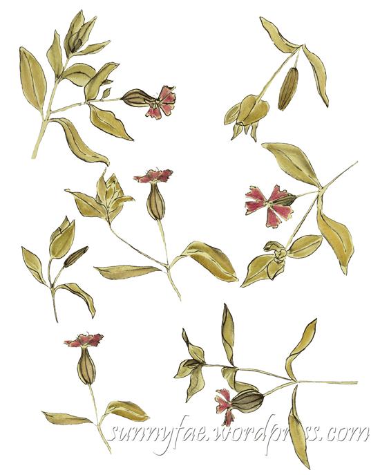 garden wild flower