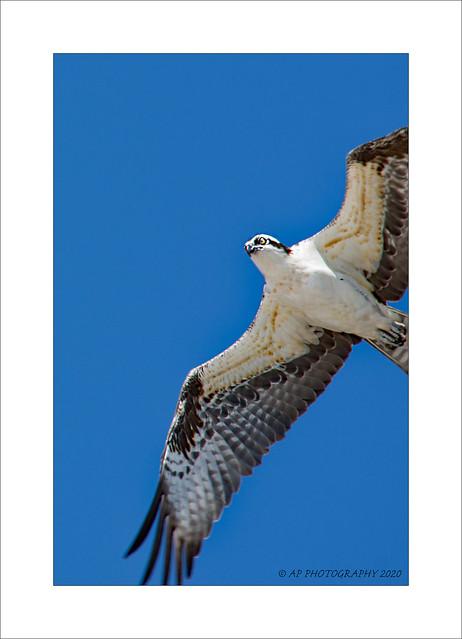 Raptor Flight