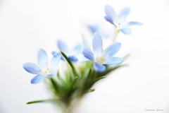 My Baby Blue  (由  Catherine Sienko