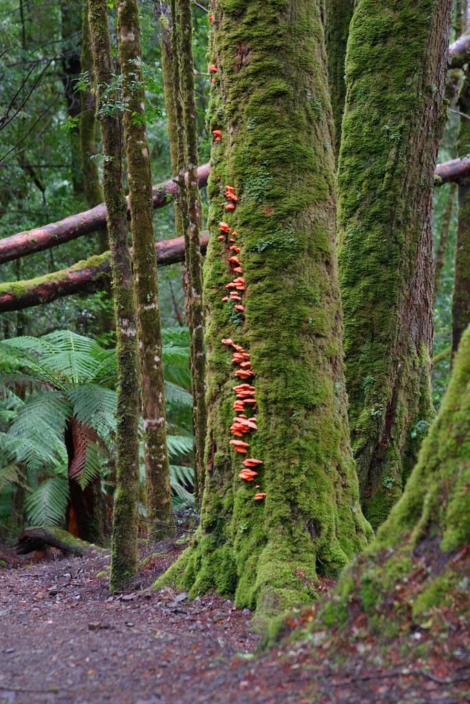 Tarkine Rainforest, Tasmania