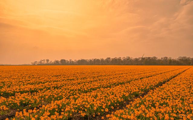World of Orange.