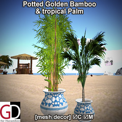 Potted Golden Bamboo & tropical Palm PIC