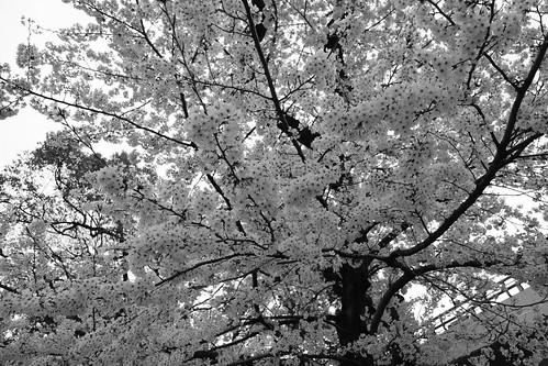 30-03-2020 Kyoto vol01 (27)