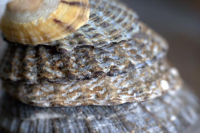 Layering up [shells#53]