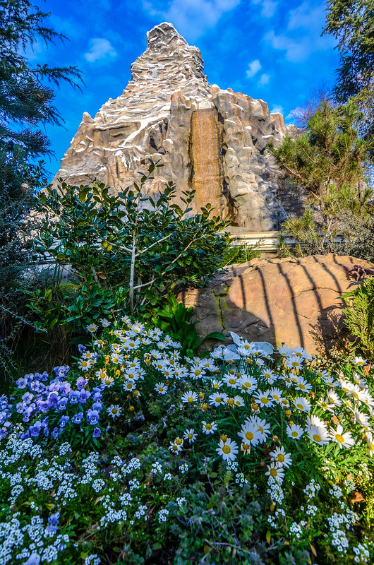 Matterhorn flowers tall DL