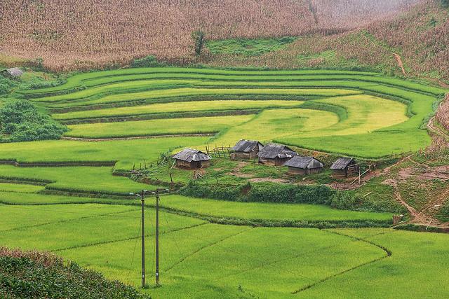 _Y2U5929.0913.Lóng Luông.Vân Hồ.Mộc Châu.Sơn La