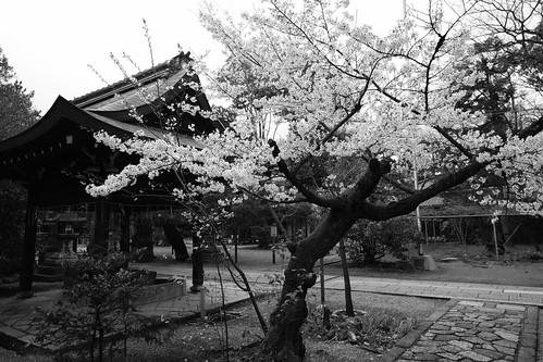 30-03-2020 Kyoto vol01 (66)