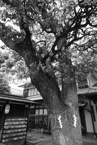 30-03-2020 Kyoto vol01 (79)