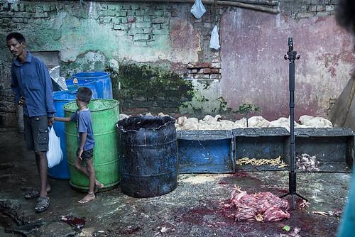 Campaña mundial por el fin de los mercados húmedos de animales
