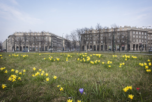 architecture bloom blossoms buildings city cityscape daffodils daytime downtown europe flowers historic krakow landmark narcissus nature nowahuta outdoor plaza poland season spring springtime square tourism travel view yellow placcentralny tistheseason