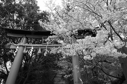 30-03-2020 Kyoto vol01 (94)