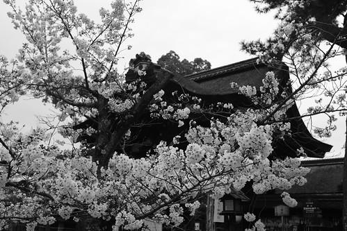 30-03-2020 Kyoto vol02 (19)
