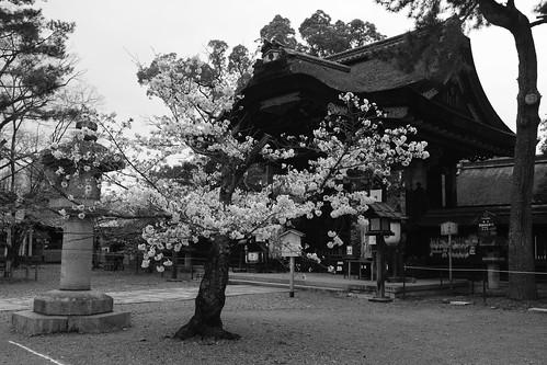 30-03-2020 Kyoto vol02 (18)