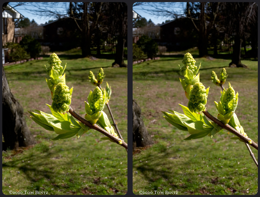 Buds & Blossoms 4 (Stereo)