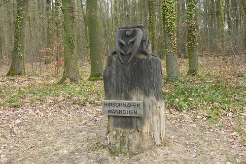 Hirschkäfer m