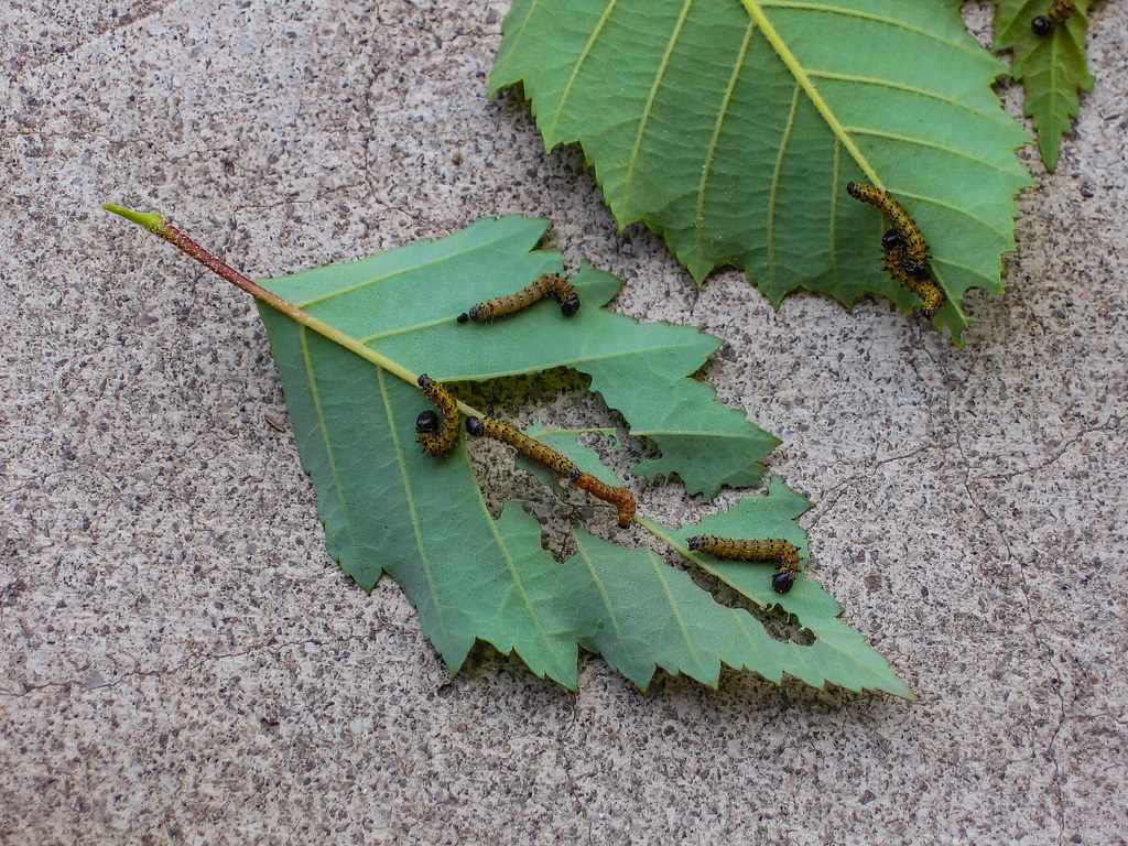 Eating Leaves 04