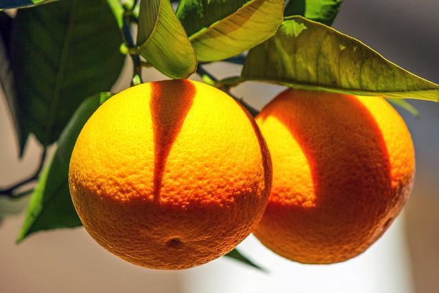 Arance______Oranges