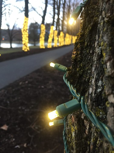 Willow Path with lights