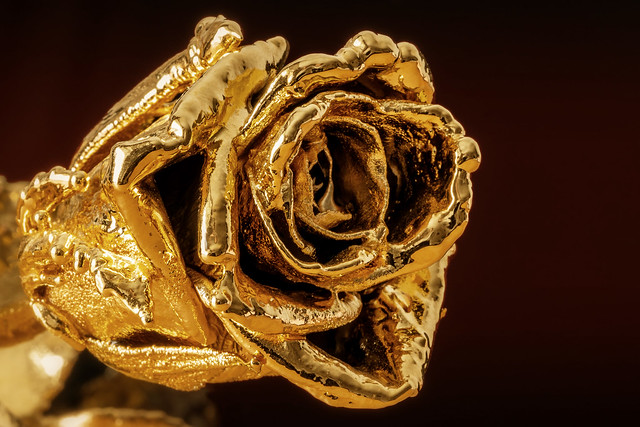 Layers of a golden Rose