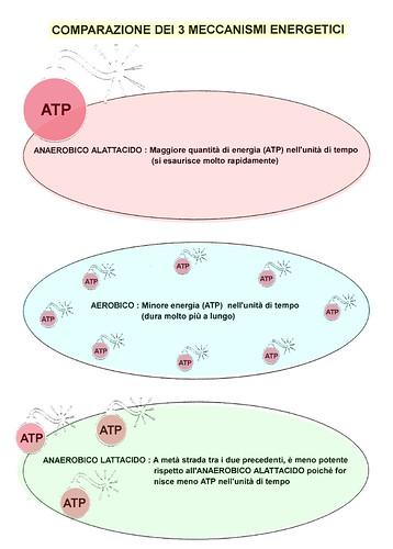 Comparazione dei 3 meccanismi energetici