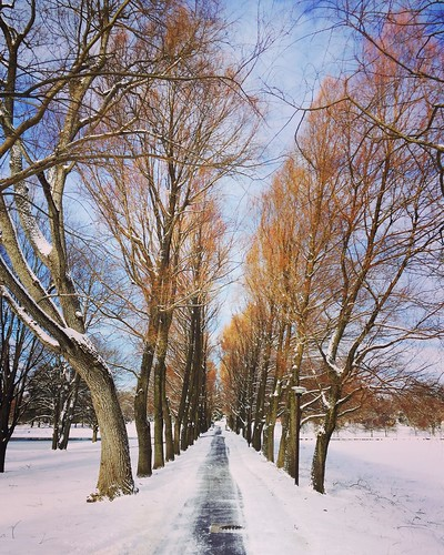 Willow Path at Colgate University