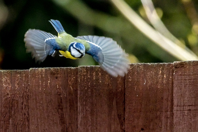one flew over this cuckoos fence_1